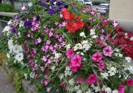 Saint-Laurent-du-Var, ville fleurie